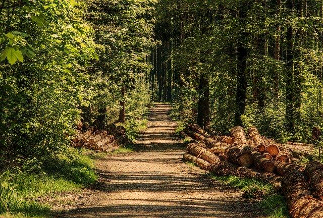 lesy napadnuté kůrovcem