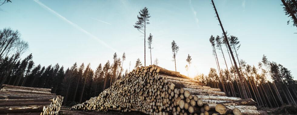 napadené stromy bekyní mniškou