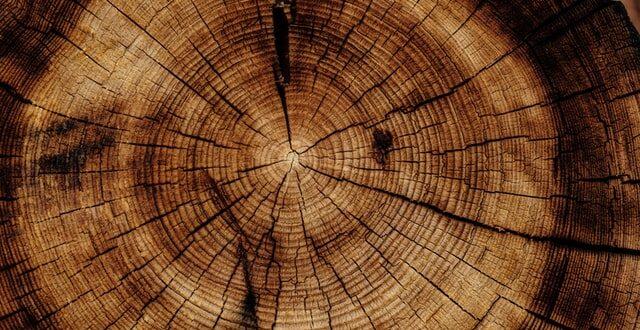 měsíční dřevo