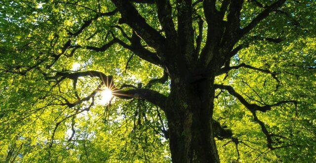 vzrostlý strom na hranici pozemku